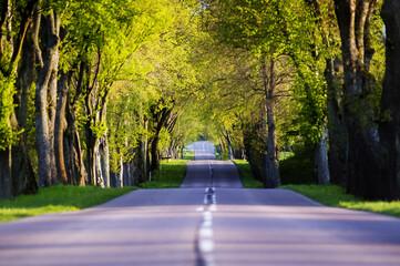 Kręta droga asfaltowa wśród rosnących drzew