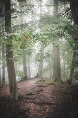 Magiczny poranek w zamglonym jesiennym lesie, Otomin koło Gdańska