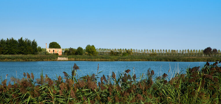 A tree in a rural house without roof, in the lagoon of Caorle, in Brussa, province of Venice