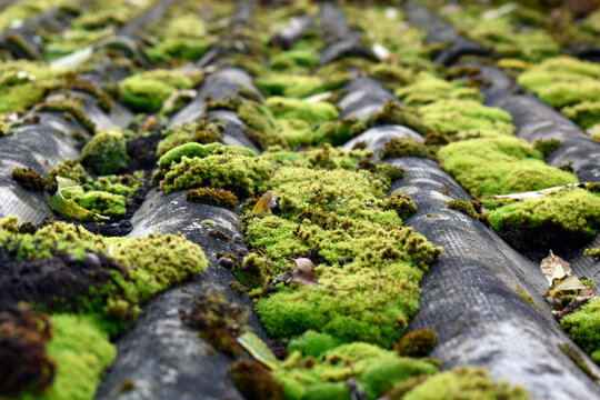 Photo of an old roof overgrown with moss
