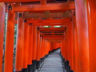 Torii gates of Fushimi Inari Taisha, It is famous for its thousands of vermilion torii gates, Kyoto, Japan
