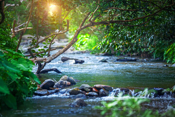 Mysterious mountain stream river flowing through the green forest
