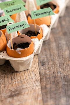 Organic seed starter pots