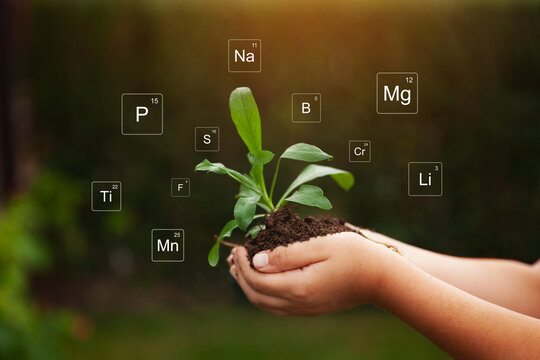 Nutrients mineral in soil and plant. Digital icon of Mendeleev's periodic table. Close up of hands holding soil and plant.