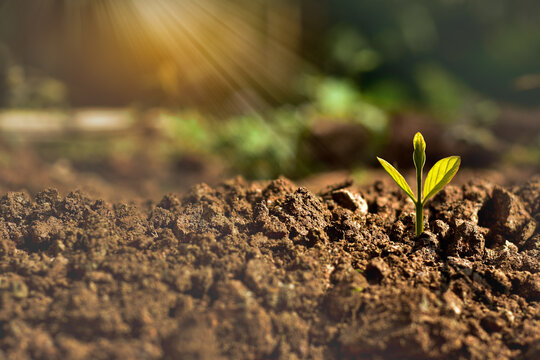 agriculture plant seeding growing in garden and sunlight, new life growth ecology business financial progress concept ,Earth Day