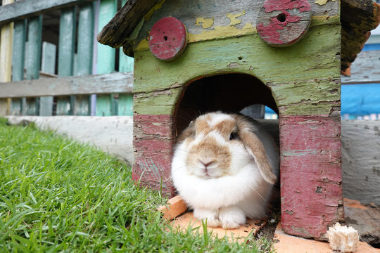 Cute rabbit resting comforatbly in his little wooden house