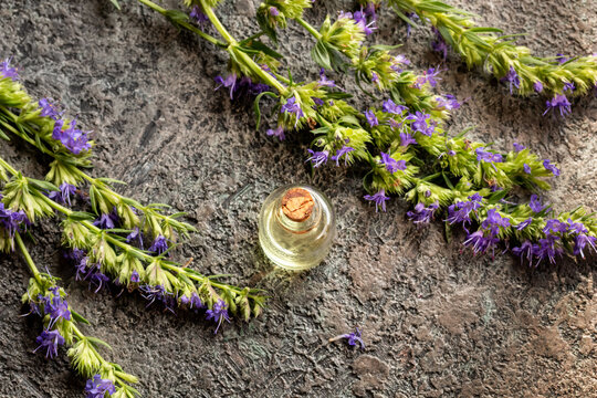 Essential oil bottle with fresh blooming hyssop plant