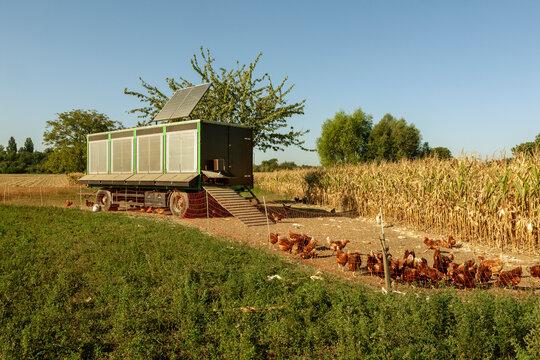 Freiland Hühnerhaltung mit Mobilstall
