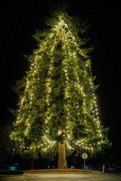 Big Christmas tree illuminated with white lights