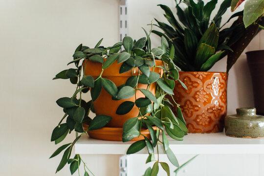 Detail Shots of A Plant Shelf