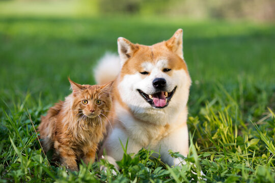 Dog and cat in the grass