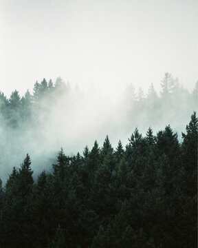 Vertical Photo of a Misty Mountainside