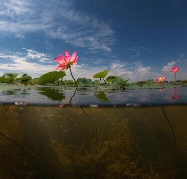 Underwater split photo