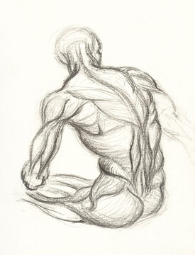 Man Anatomy Drawing Muscles