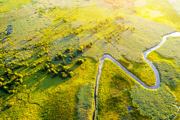 Wall Mural - Aerial drone view of winding river in green field. Lush wetlands of bird's eye view.