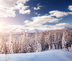 Wall Mural - Frosty day in snowy coniferous forest. Incredible wintry wallpapers.
