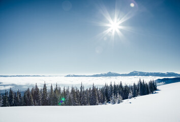 Wall Mural - Fantastic winter landscape with spruces covered in snow. Frosty day, exotic wintry scene.