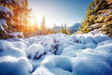 Wall Mural - Snowy landscape on a frosty day, frozen trees in winter mountains.