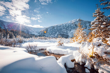 Wall Mural - Fantastic winter landscape with spruces covered in snow.