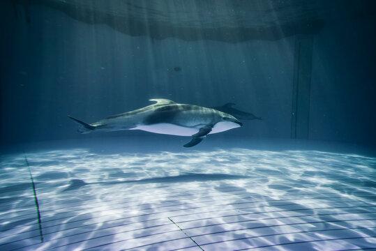 JAPAN Aquarium