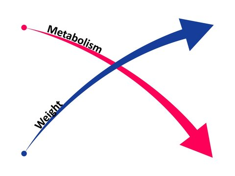 Slow down metabolism and weight gain. The ratio of metabolism to weight gain. Vector