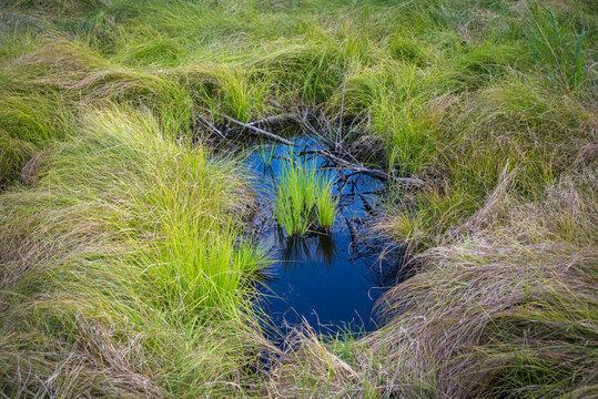wet hole in a swamp meadow in Austria
