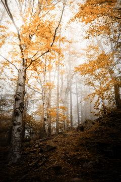 Herbstwald in den Wäldern der Berge in Europa