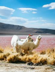 Alpaca in front of Laguna Colorada in Bolivia