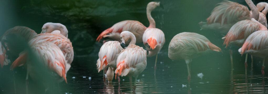 Beautiful flamingo in nature
