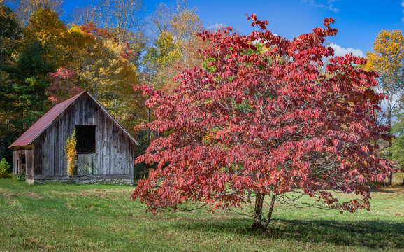 Scenic barn with red tree in autumn