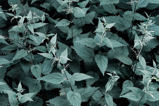 Green leaves pattern and natural forest background