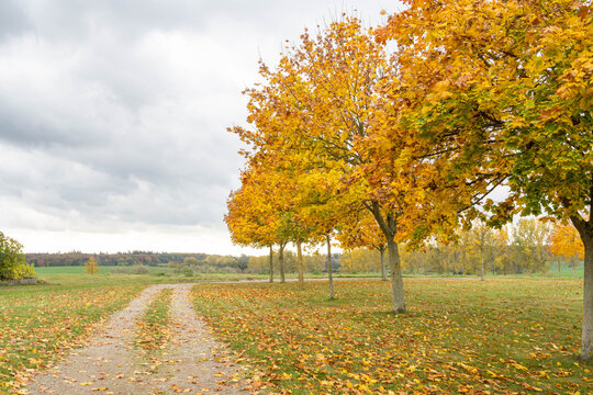 autumn landscape with trees and colorful leaves