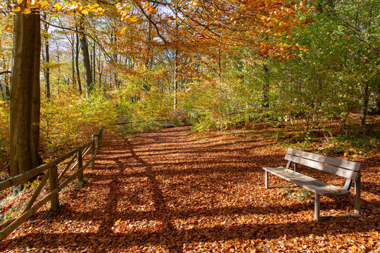 Bench in a park in October