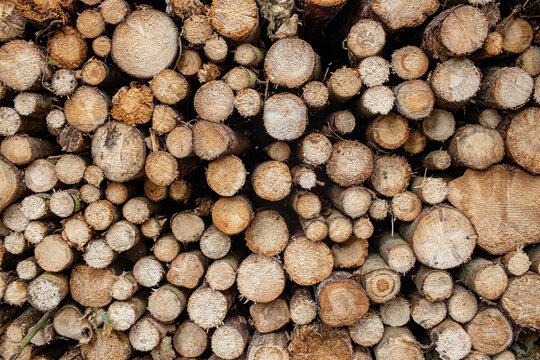 Holzstapel Baumstämme Forstwirtschaft