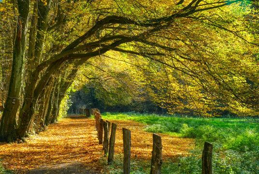 Waldweg bei Haan-Gruiten im Herbst