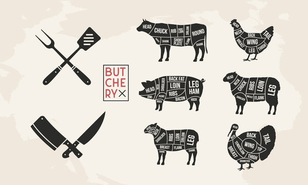Butcher's guide set. Pig, Lamb, Cow, Chicken, Turkey silhouette cuts. BBQ utensils. Meat diagram. Cuts of Meat. Vector illustration