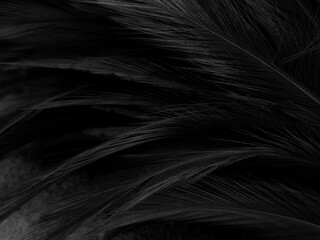 Beautiful abstract black feathers on dark background, gray feather texture on black background, white feather wallpaper, love theme, dark day
