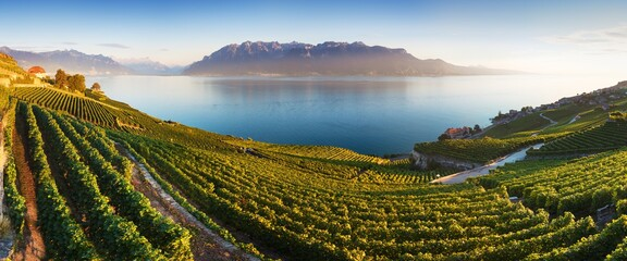 Panoramic view of the city of Vevey at Lake Geneva with vineyards of famous Lavaux wine region on a...