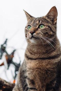 The gaze of a cat