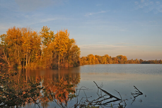 Foliage d'autunno sul lago di Basiglio - Parco Sud Milano