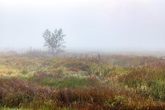 Busch im Nebel auf einer Wiese bei Schrobenhausen