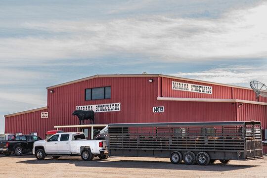 Marana, AZ - Nov. 23, 2019: Marana Stockyards is a livestock auction specializing in marketing Arizona cattle.