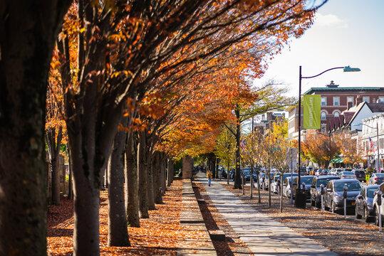 Princeton Foliage During Pandemic Covid19