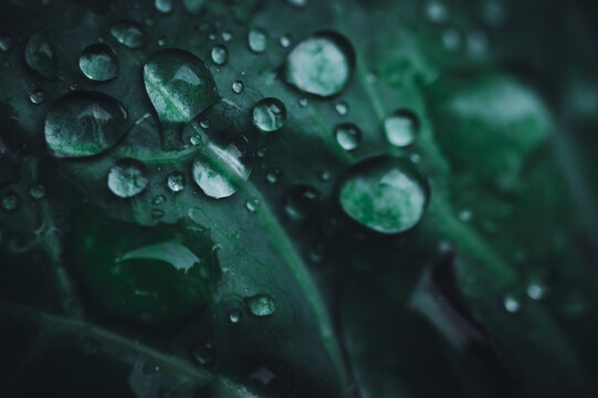 Water droplets macro on leaf Love water concept Love nature