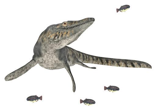 Mosasaurier Tylosaurus auf der Jagd, Freisteller