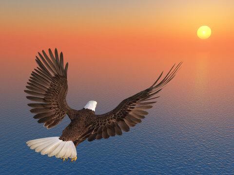 Seeadler bei Sonnenuntergang über dem Meer