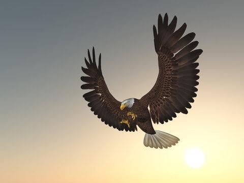 Seeadler bei Sonnenuntergang