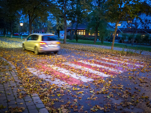 Zebra crossing with autumn leaves and car danger