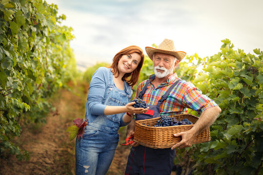Portrait of a cheerful senior man with daughter during harvest grape