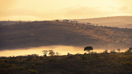 Mesmerizing scenery of jungles in South Africa